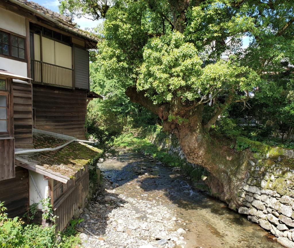 家のすぐ裏を流れるキレイな野鳥川