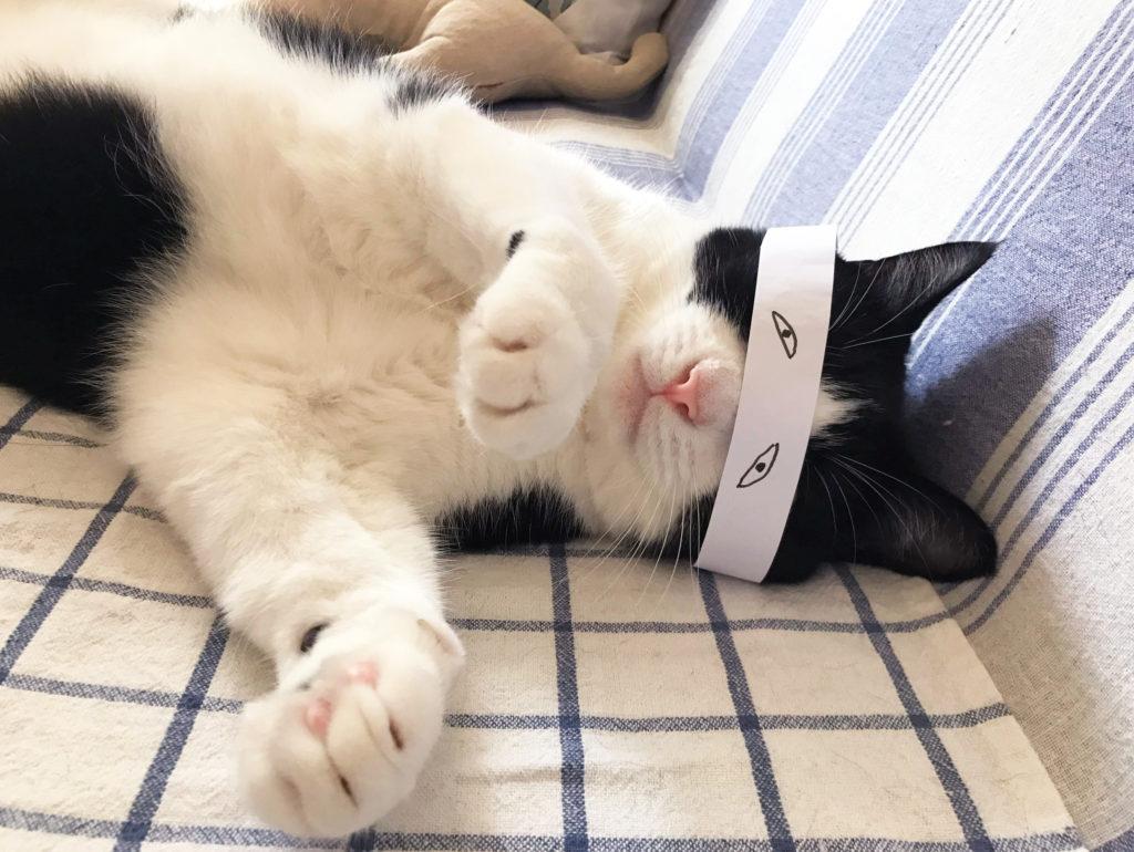 ふざけて目隠しをされる猫