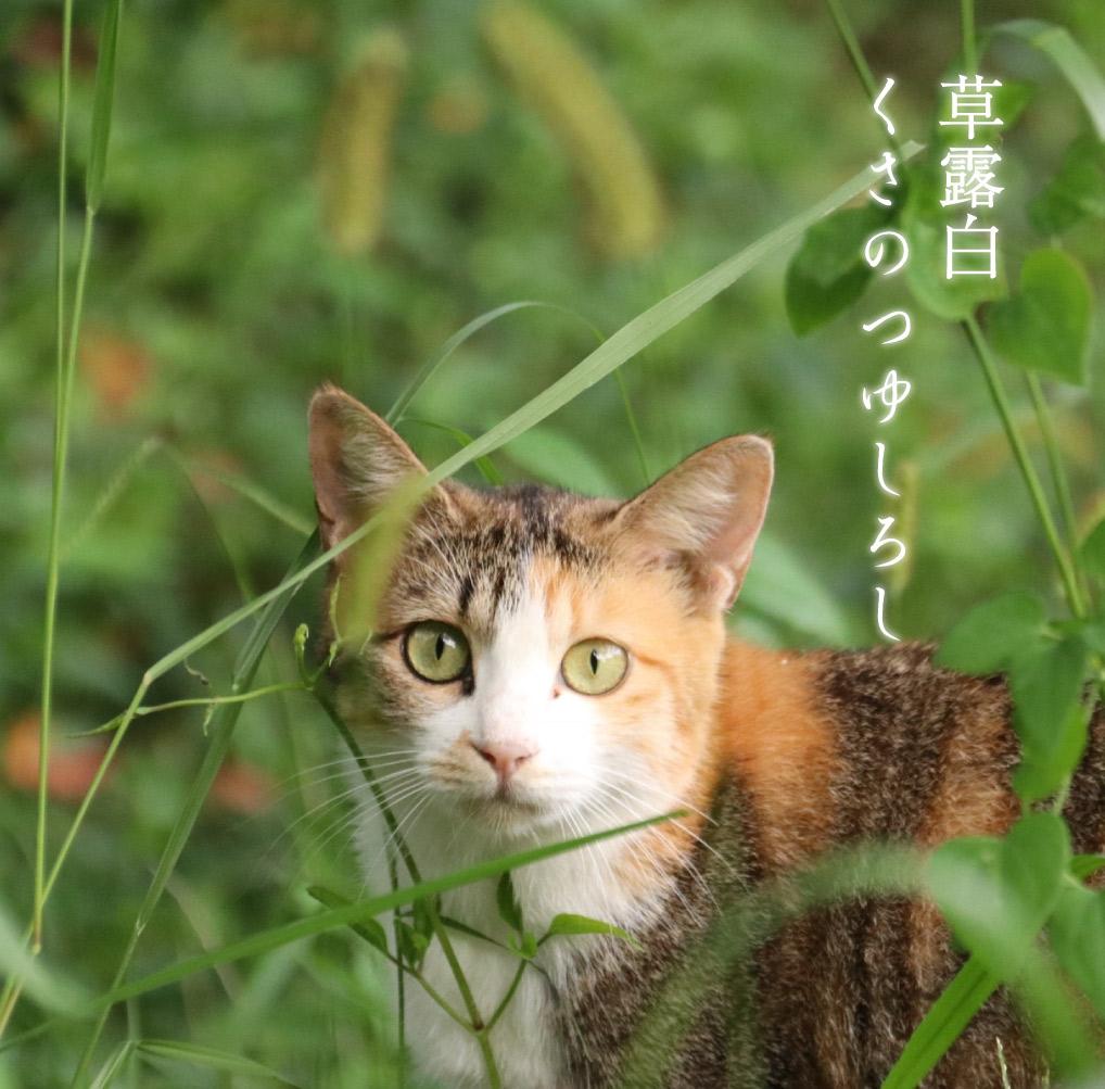 猫と草露白