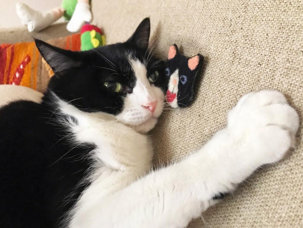 自分そっくりのおもちゃに寄り添うハチワレ猫
