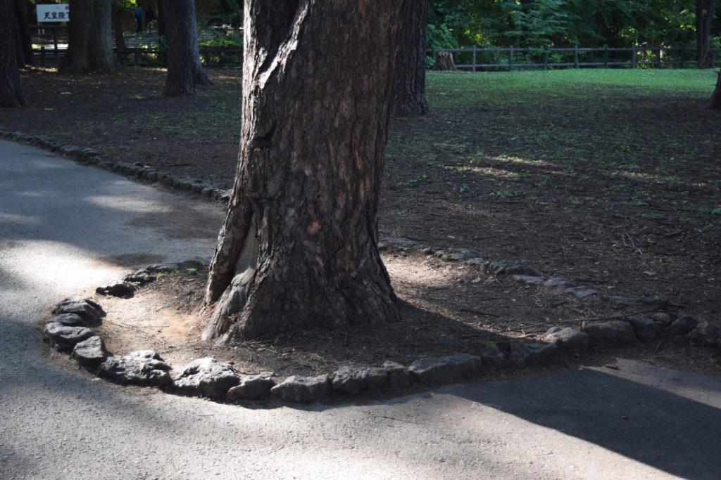 公園の通路に生える木