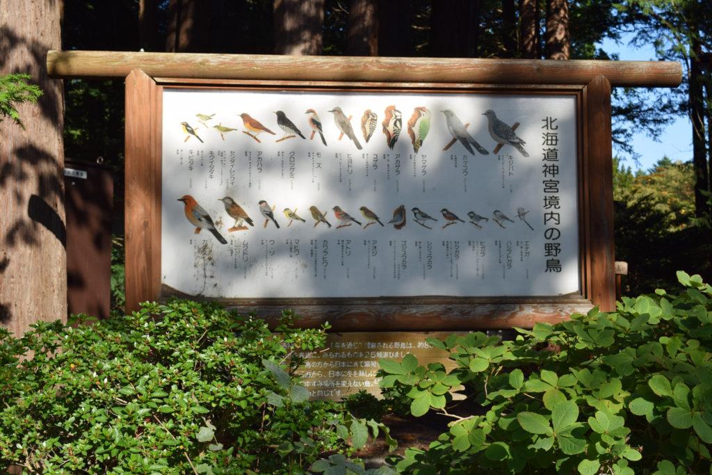 北海道神宮境内の野鳥一覧