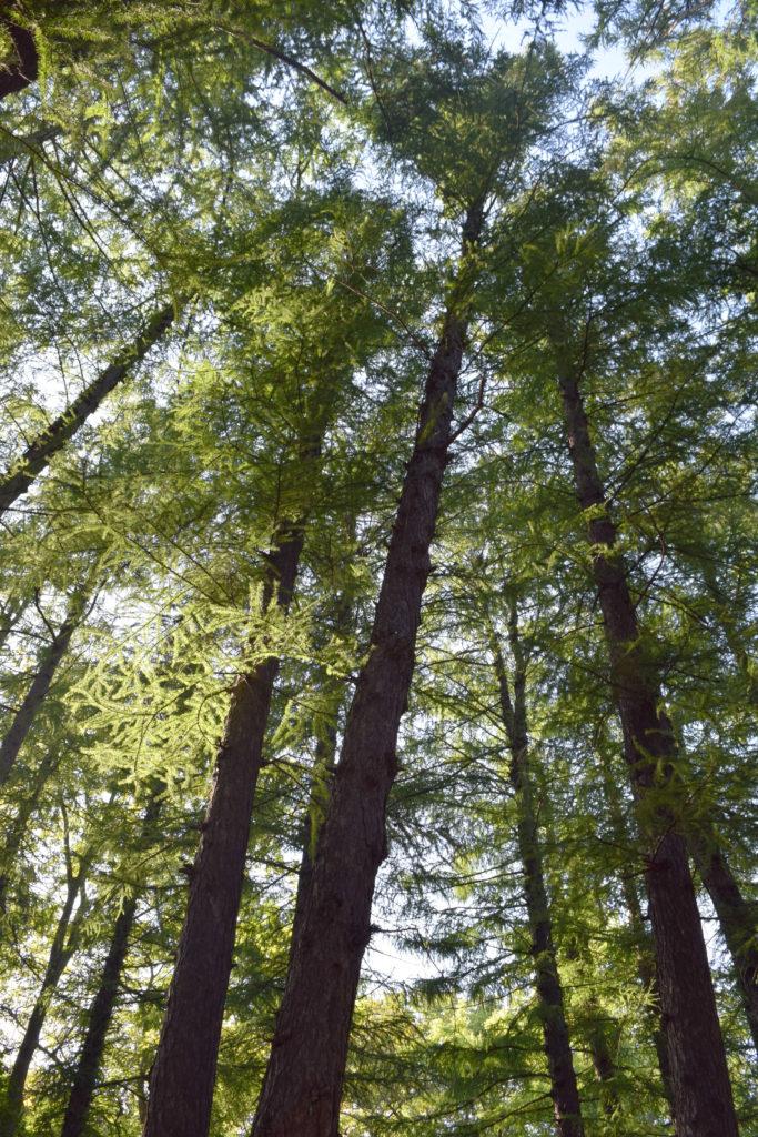 生い茂った木