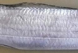 銀粉で覆われた表面