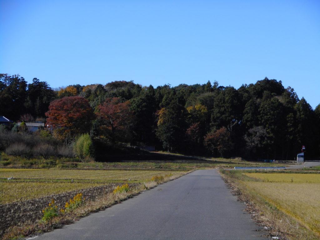 屋敷林の外側から見た景色