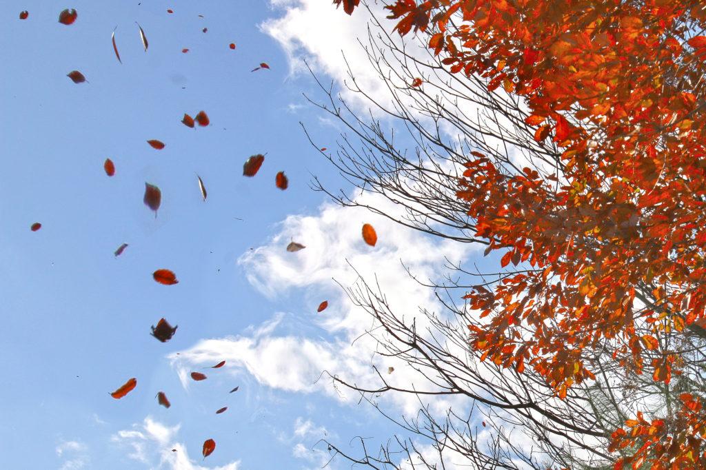 風に舞う枯葉