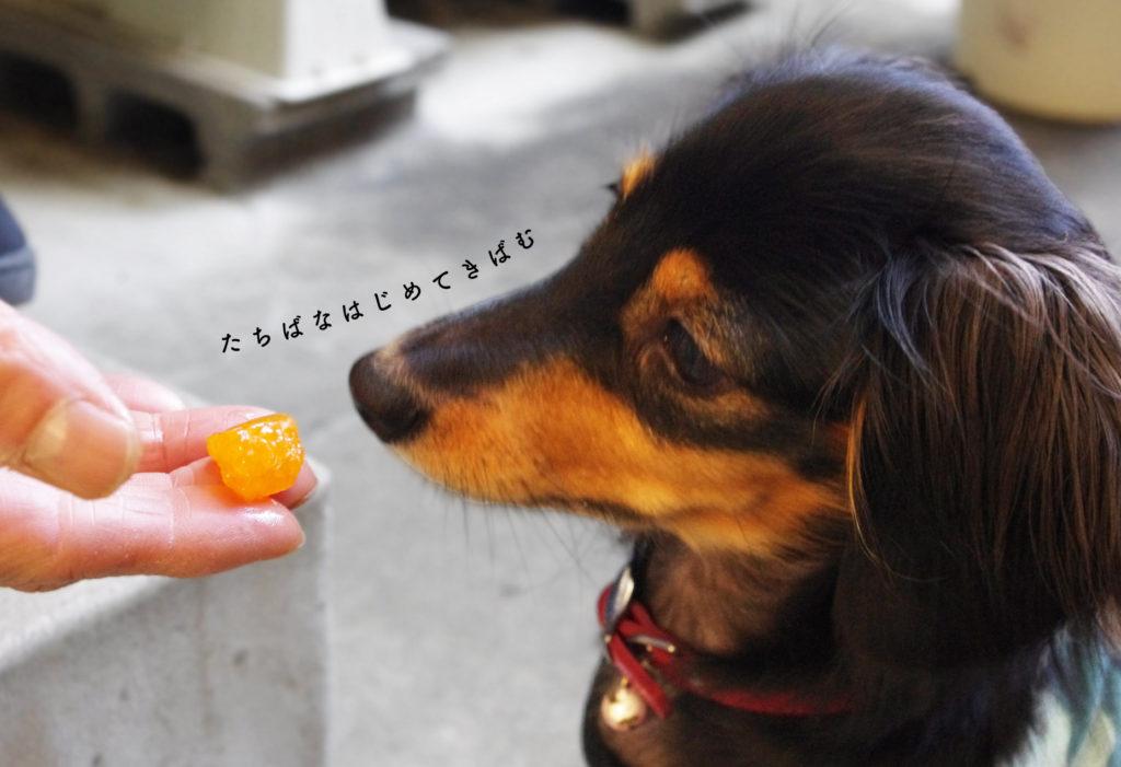 みかんと犬