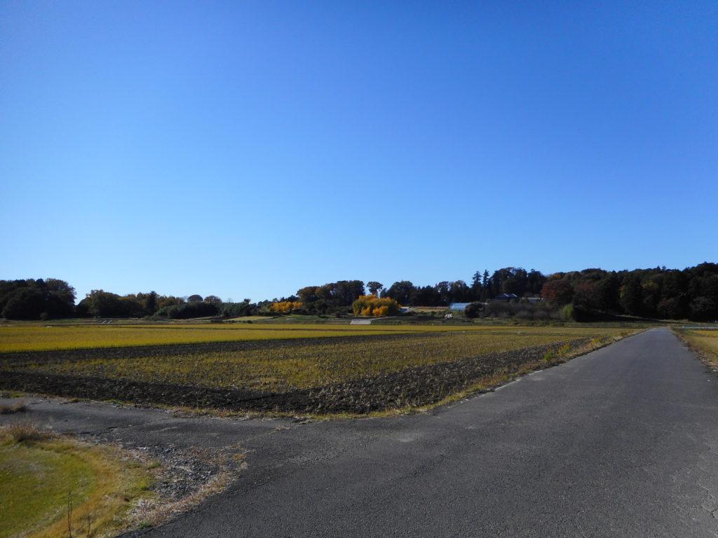 田んぼの向こうに見える屋敷林
