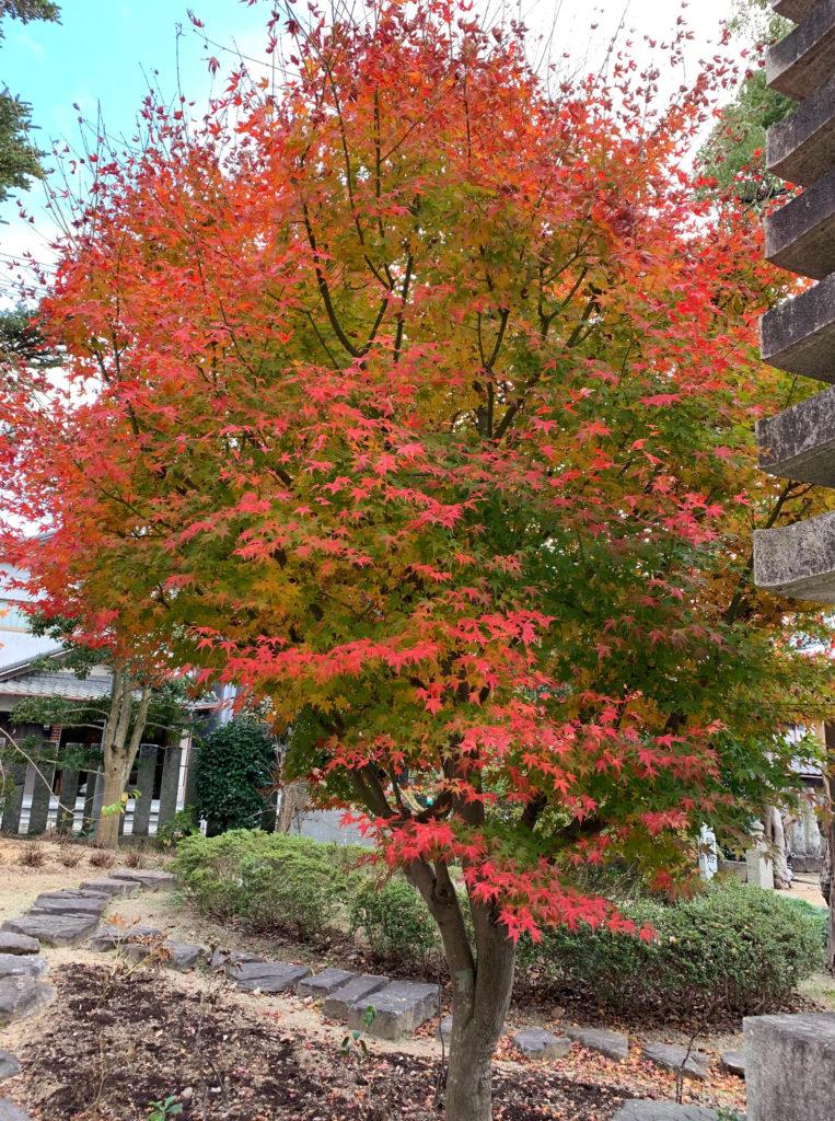 本山寺の紅葉