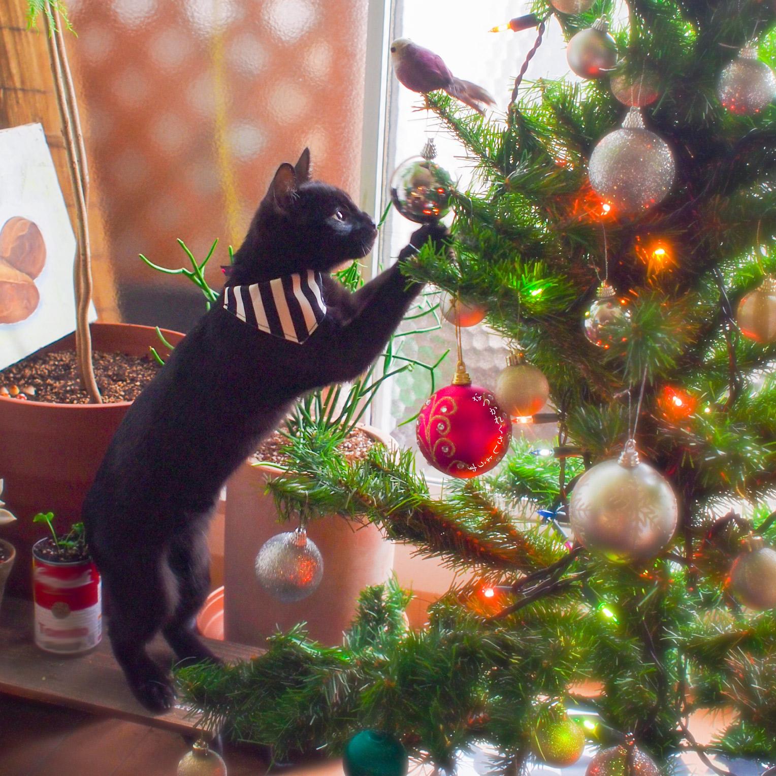 猫とクリスマス