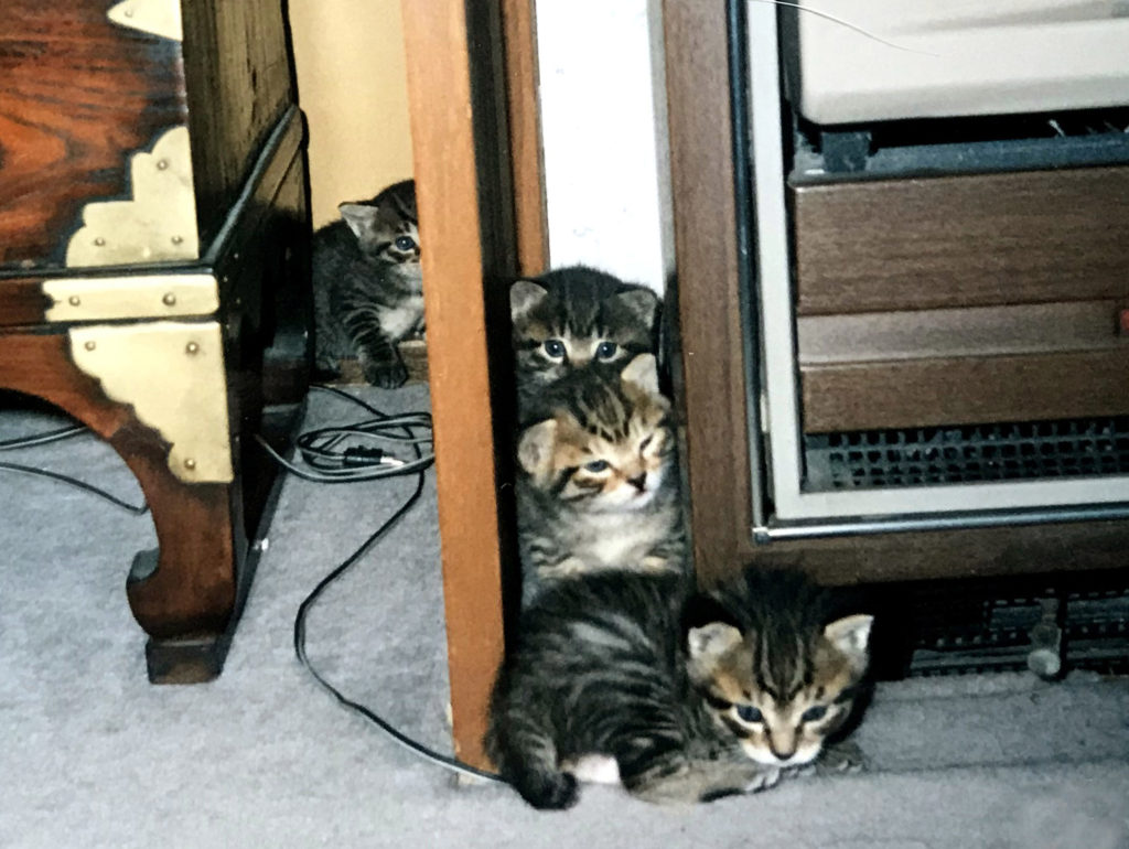 隙間で遊ぶ子猫