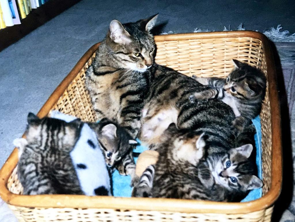 育児中の猫