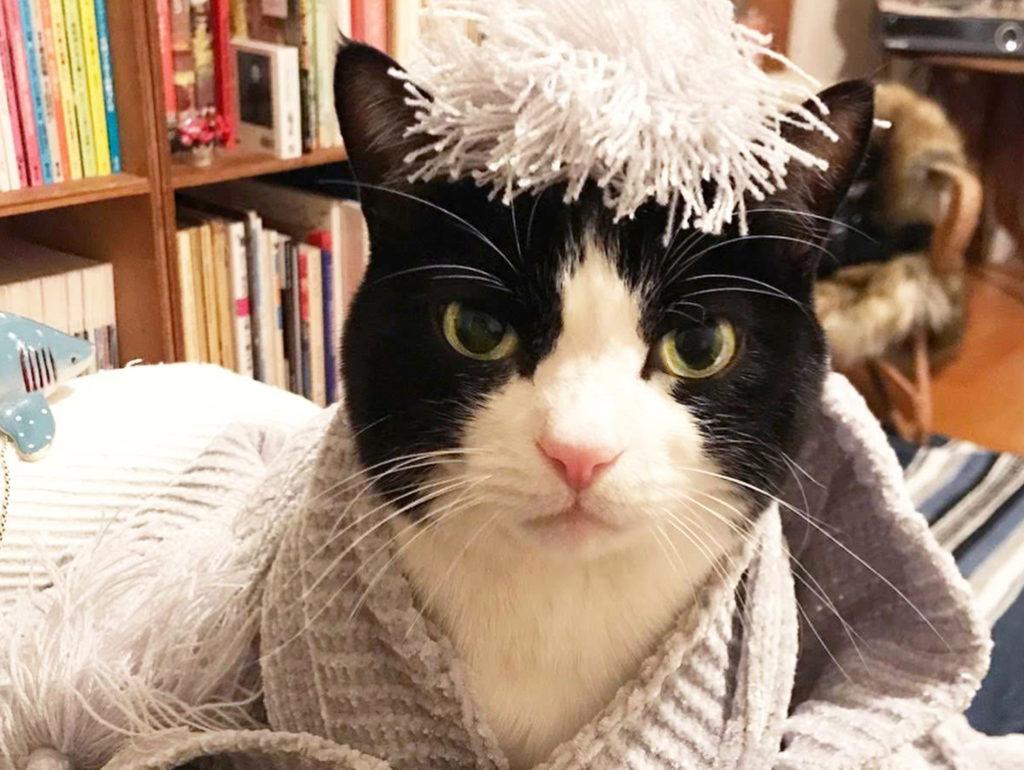 お洒落した猫