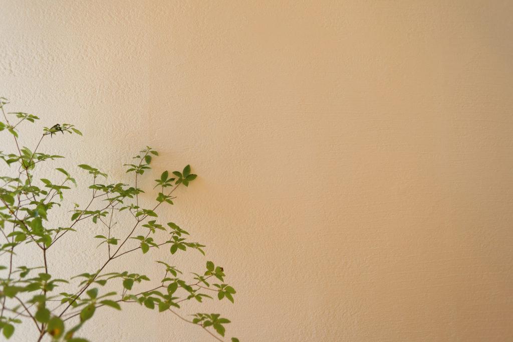 ドウダンツツジと漆喰壁