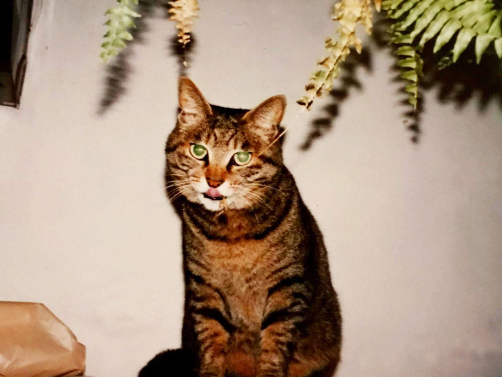 テヘペロ猫